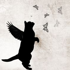 Black Cat Angel <3