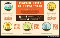 The global demand for rice is booming. To keep up with this demand, rice production must increase by about 70 percent over the next two decades. At the same time, too much or too little water, extreme temperatures, and poor soils are threatening rice production. Developing better rice varieties that stand up against environmental and soil stresses can help African and Asian rice farmers—and their families—thrive.