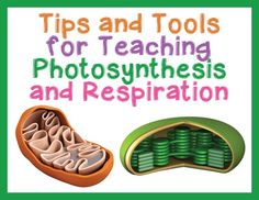 Tips and Tools for Teaching Photosynthesis and Respiration in High School Biology - Science and Math with Mrs. Lau