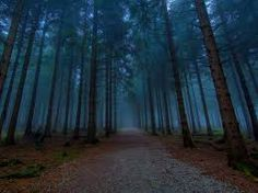 Resultado de imagen para bosques oscuros
