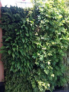 Texturas muro verde