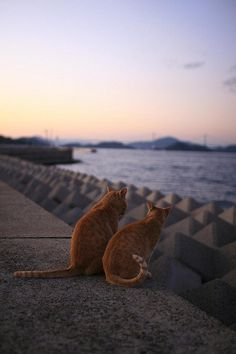 Ginger cats by the sea