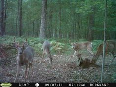 My trail cam