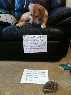 """Projeto reúne história de cães assumindo erros que fizeram em casa. - """"Eu dei boas-vindas ao ouriço para sua nova casa tentando comê-lo. Minha mãe passou uma hora tirando espinhos de mim."""" """"Eu persegui o cachorro pela casa, porque ele está com medo de mim agora. LOL."""" <3"""