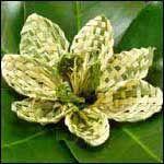 Book on weaving flax flowers Flax Weaving, Weaving Art, Hawaiian Flower Hair, Flax Flowers, Finger Weaving, Floral Wedding Decorations, Found Art, Flower Arrangements, Leaves