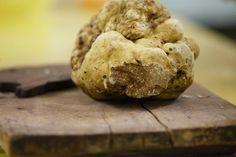record white Magnatum Pico truffle