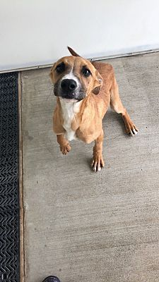 Atlanta Ga Foxhound Meet Augusta A Pet For Adoption Four
