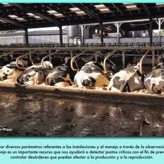 En una ganadería existen tres variables que de forma general se agrupan en el medioambiente, los animales y las personas. En un sistema intensivo el medio lo consti- tuye principalmente el establo, donde las vacas desarrollan su vida y su actividad productiva. Así, el estado en el que se encuentren las vacas será un re