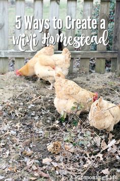 5 Ways to Create a Mini Homestead is part of Acre homestead - People often feel that they need a lot of land to homestead That really isn't the case If you use your land and time wisely you can get great gains without a whole lot of space Homestead Layout, Homestead Farm, Homestead Survival, Survival Skills, Survival Prepping, Survival Gear, Backyard Farming, Chickens Backyard, Permaculture