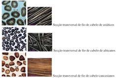 blog-folyc-dra-ana-flavia-oliveira-tipos-de-cabelo-e-seus-significados-piloso-e-o-tipo-de-cabelo-01