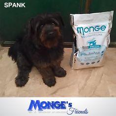 Spank #Mongesfriends