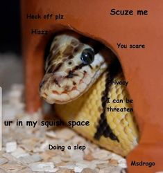 scaare the snek Cute Funny Animals, Cute Baby Animals, Funny Cute, Animals And Pets, Funny Dogs, Cute Reptiles, Reptiles And Amphibians, Beautiful Snakes, Animals Beautiful