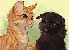 Warrior Cats Series, Warrior Cats Books, Warrior Cats Fan Art, Cute Animal Drawings, Animal Sketches, Cute Drawings, Pretty Cats, Cute Cats, Cat Oc