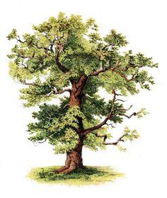 Glanzbilder - Victorian Die Cut - Victorian Scrap - Tube Victorienne - Glansbilleder - Plaatjes : Baum - tree - arbre