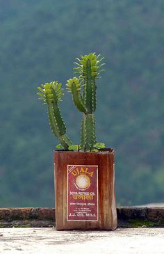 Anyone know the name of this cactus? Iwas given one that's about 4 feet tall, lots branches, and the little shoots on top, Fran -  Plant in a tin by MJField, via Flickr
