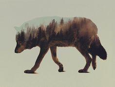 Les photographies animales « superposées » de Andreas Lies   Mr Mondialisation