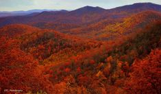 scenic photos of autumn in the carolinas | 10 Country Roads In North Carolina That Are Pure Bliss In The Fall