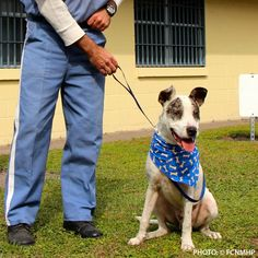 TODAY'S PROJECT: Give 78 Imprisoned Veterans Hope Some men and women return from service struggling with mental health issues so severe they act out and end up in prison. These prisoners want to be able to contribute to their community in spite of being imprisoned. First Coast No More Homeless Pets TAILS (Teaching Animals and Inmates) program allows them to do so.