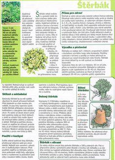 - Dieta Detox, Entertainment, Gardening, Plants, Lawn And Garden, Plant, Planets, Horticulture, Entertaining