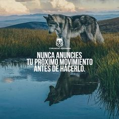 La imagen puede contener: texto y exterior Motivational Phrases, Inspirational Quotes, Ramses, Best Quotes, Life Quotes, Wolf Quotes, Millionaire Quotes, Philosophy Quotes, Magic Words