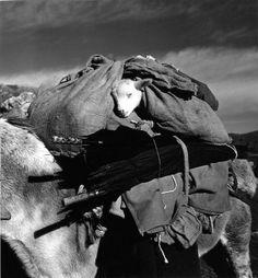Atelier Robert Doisneau |Galeries virtuelles desphotographies de Doisneau - Animaux - La Transhumance