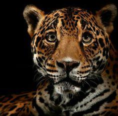 Amazing ...  #jaguar