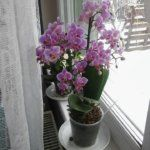 Ikebana, Garden Plants, Orchids, Gardening, Flowers, Lawn And Garden, Royal Icing Flowers, Flower, Florals