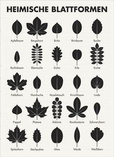 Heimische Blattformen / Bäume bestimmen by Iris Luckhaus