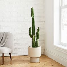 Faux Potted Cactus Plant - - Our vibrant faux cactus lets you flex your green thumb without the work. Brighten up any room with this potted botanical—no need to worry about watering! Indoor Cactus Plants, Cactus House Plants, Cactus Plant Pots, Cactus Terrarium, Palm Plant, Cactus Decor, Faux Plants, Cacti And Succulents, Plant Decor