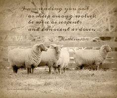 """BE ON YOUR GUARD..."" ~ Matt. 10:17a Matthew 10 6, Sheep Among Wolves, Spiritual Wisdom, Jesus Quotes, Bible Verses, Spirituality, Peace, Sayings, Strength"