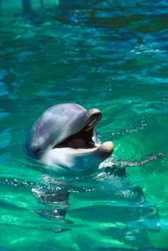 How to Swim With Dolphins in Punta Cana, Dominican Republic