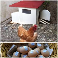Ofanto is not only fashion but also #nature. Take a look at our hens morning fresh and organic eggs! Have a nice September 1st. #OfantoBuyFromItaly