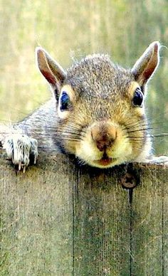 'Can you lend me a cup of acorns, Gladys?'