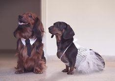 Custom Dog Wedding Collar Pet Necktie Collar Dog by youhadmeatwoof, $29.00