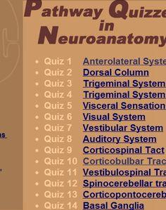 pathway quizzes in neuroanatomy