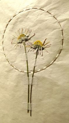 Pressed Daisies.  Inspired by the Immortelles, I made small books with pressed flowers for an exhibition in Aberteifi/Cardigan.  Pressed flowersand gold stitch on tea stained paper. The cover is made from the end papers of an old broken book.