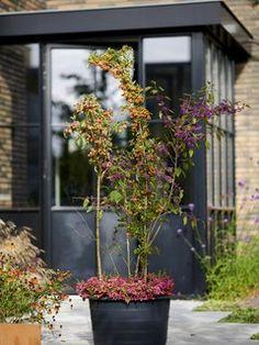 Der Herbst hat viele Seiten. Das zeigt sich auch in der Pflanzenwelt. Der Wechsel der Jahreszeiten ist die Zeit, in der viele wunderschöne Pflanzen zu leuchten beginnen. Ob wir nach Pflanzen suchen, um unseren Eingangsbereich zu verschönern, einen herbstlichen Kranz zu gestalten oder den Garten mit Farbe zu füllen – die Auswahl ist riesig. Wir präsentieren hier eine Auswahl typischer Herbstpflanzen, die wir in der kommenden Saison in vollen Zügen genießen können! Ornamental Plants, Autumn Garden, Spring Time, Beautiful Flowers, Berries, Birds, Winter, Wall, Large Plants