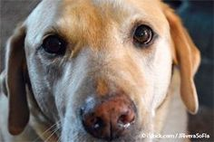 Two common proteins NOT to feed dogs (and both are prevalent in majority of pet foods)!