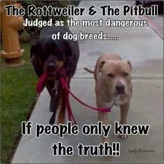 I will now have at least one of each so i can walk them thr road and yell at people I TOLD YOU THEY ARE GOOD DOGS!!!!!!