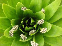 Trucos para mantener vivas las plantas en nuestra ausencia - http://www.jardineriaon.com/trucos-para-mantener-vivas-las-plantas-en-nuestra-ausencia.html