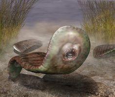 Odontogriphus. Copyright Quade Paul