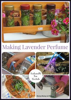 Sustainable sensory fun with kids - making lavender perfume. Find out how at mummy musings and mayhem