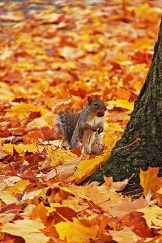 Spokane Washington, Fox, Wild Animals, Foxes, Wild Ones