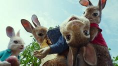 Sony Pictures released an official trailer for Peter Rabbit, the upcoming live-action animated adventure comedy film directed by Will Gluck, based on the Rose Byrne, Beatrix Potter, Margot Robbie, Peter Hase Film, Coelho Peter, Peter Rabbit Movie, Wild Bunny, Wild Rabbit, Movie Guide