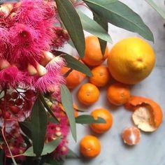 PORTLAND APOTHECARY: Tangerine Peels as Medicine! // Portland Apothecary / Plant Medicine http://portlandapothecary.blogspot.com/2014/01/tangerine-peels-as-medicine-portland.html