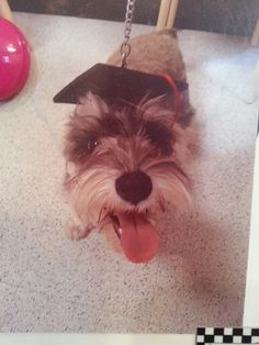 Odie graduated from Puppy School! Yey!