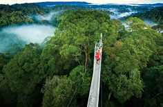 Sky Walk in Monteverde, eco-tourism hotspot, ziplines, waterfalls typical rainforesty things ***