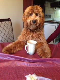 Morning caffeine is necessary-----Charlie