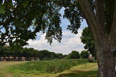 A photo of the leafy suburbs of Kensington Plants, Photography, Fotografie, Photograph, Photo Shoot, Planters, Fotografia, Plant, Planting