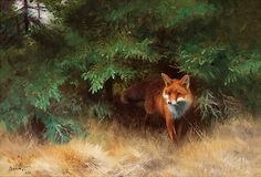 Fox Hiding under Spruce - Bruno Liljefors 1926 Swedish Wildlife Paintings, Wildlife Art, Animal Paintings, Art Fox, Fuchs Illustration, Fox Collection, Nature Collection, Animal Painter, Horse Wallpaper